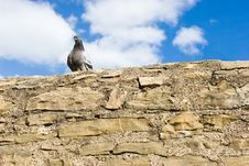 Free Pigeon On The Wall Royalty Free Stock Images - 4656549