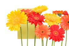 Free Daisies - Isolated On White Royalty Free Stock Image - 4656756