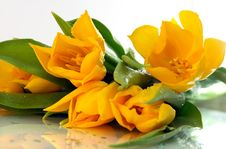 Free Yellow Tulips Royalty Free Stock Images - 4656859
