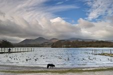 Free Collie By Derwentwater Royalty Free Stock Image - 4656936