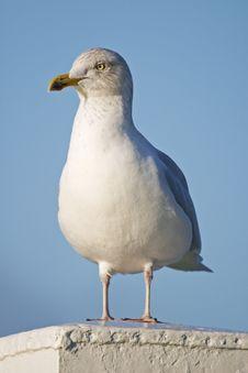 Free Seagull On A Pillar Stock Photos - 4658503
