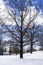 Free Naked Trees In Winter Royalty Free Stock Photography - 4663147