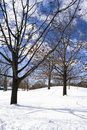 Free Naked Trees In Winter Stock Photo - 4663160
