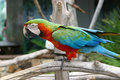 Free An Image Of A Colorful Parrot Stock Image - 4663371