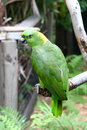 Free Colorful Green Parrot Royalty Free Stock Images - 4663409