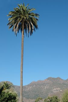 A Big Palm Over The Sky Stock Image