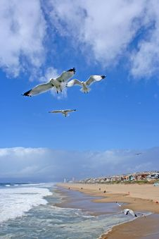 Seagulls Flying Over The Shore Stock Photos