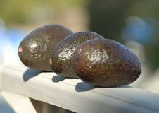 Free Three Avocados Royalty Free Stock Image - 4661746