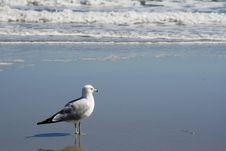 Free Seagull Looking At Waves Stock Photo - 4662130