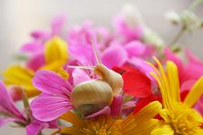 Free Snail In The Flowers Royalty Free Stock Photo - 4662215