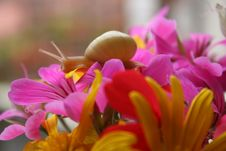 Free Snail In The Flowers Royalty Free Stock Image - 4662216