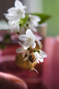 Free Baby Snail On The Pink Flower Stock Images - 4662244