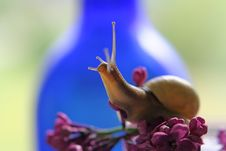 Free Snail On The Blue Stock Photo - 4662250