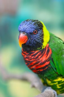 Free A Colorful Parrot Royalty Free Stock Photo - 4663385
