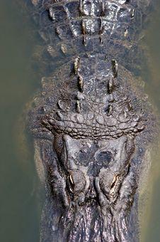 A Aligator In The Florida Swamp Land Stock Photos