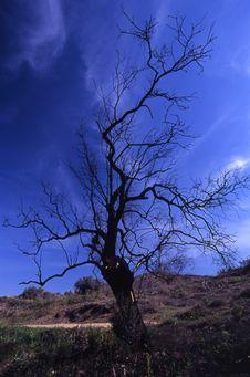 Free Naked Tree Stock Photography - 4663592