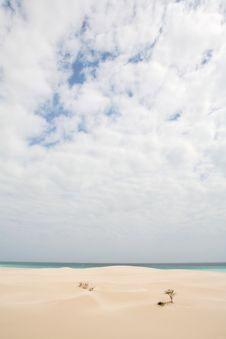 Free Beach On Socotra Island Stock Photography - 4664252