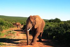 Free African Elephant Bull Stock Image - 4664561
