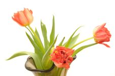 Free Red Tulips In The Glass Vase Stock Photography - 4665542