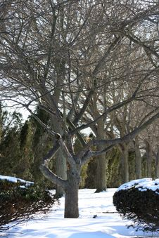 Free Twisted Winter Tree Stock Photo - 4665560