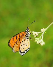 Free Butterfly Perched On A Flower Stock Photos - 4666603