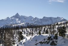 Free Alpine Mountains With Pine Trees Royalty Free Stock Photography - 4667307