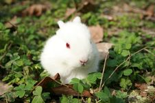 Free Lovable Rabbit Royalty Free Stock Images - 4667739