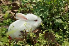 Free Lovable Rabbit Stock Images - 4667774