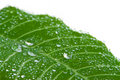 Free Macro Of Leaf With Water Drops Stock Photo - 4670800