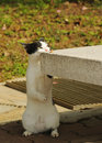 Free Curious Cat Looking Over Bench Royalty Free Stock Photos - 4671008