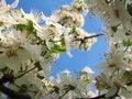 Free Spring Flower Royalty Free Stock Photos - 4672408