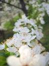 Free Spring Flower Stock Photo - 4672430