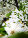 Free Spring Flower Stock Images - 4672434
