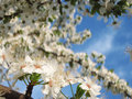 Free Spring Flower Stock Images - 4672474