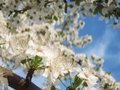 Free Spring Flower Royalty Free Stock Photos - 4672478