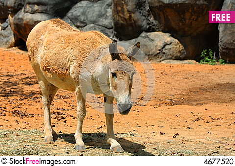 Free Fat Donkey Stock Photo - 4677520