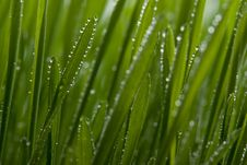 Free Fresh Grass Stock Images - 4670864
