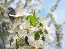 Free Spring Flower Stock Photos - 4672443
