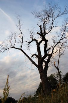Free Dry Tree Stock Images - 4673554