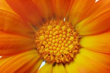 Free Yellow Flower Petals Royalty Free Stock Photos - 4673768