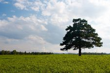 Free Alone Tree In Field Royalty Free Stock Photos - 4673778