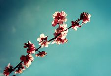 Free First Blossoms Stock Image - 4674451
