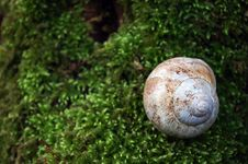 Free Snail Schell Royalty Free Stock Photography - 4675077