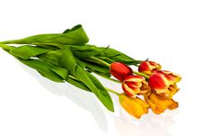Free Tulips Stock Photography - 4675552