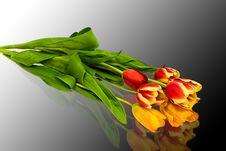 Free Tulips Stock Photos - 4675793