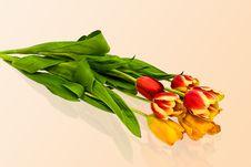 Free Tulips Royalty Free Stock Photo - 4675945