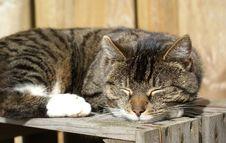 Free Peaceful Asleep. Stock Images - 4677224