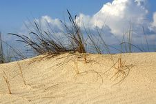 Free Grass In Sand Dunes In Front Of Sea Royalty Free Stock Images - 4677449