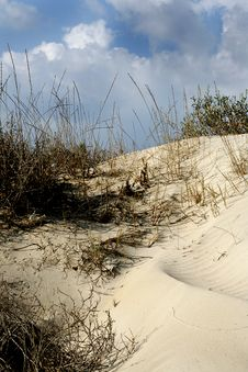 Free Grass In Sand Dunes Royalty Free Stock Image - 4678886