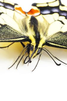 Free Close-up Butterfly Royalty Free Stock Photos - 4679148